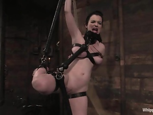 Poor Sybil Hawthorne gets tied up and toyed hard
